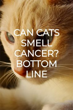 CAN CATS SMELL CANCER?Cats are controversial animals. From one side, they look cute, funny, silly, fluffy, and innocent. On the other side, they can look scary, mysterious. Maybe they give the impression that they know more than what they show.What is the truth? I believe cats are a combination of all those things together. It is also true that cats are different from each other in terms of abilities and personality, just like humans. Lung Cancer Causes, Black Cat Aesthetic, Causes Of Bad Breath, Different Types Of Cancer, What Cat, Therapy Dogs, Cat Names, Figure It Out, Photography