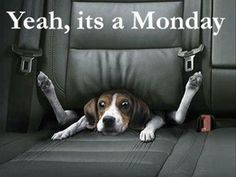 17 Pictures That Perfectly Describe How We Feel On Mondays :( | Playbuzz