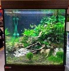 Spontaneous - Just Aquascaping Water Terrarium, Aquarium Terrarium, Aquarium Stand, Aquarium Setup, Aquarium Fish Tank, Aquarium Aquascape, Aquascaping, Aquarium Design, Aquarium Landscape