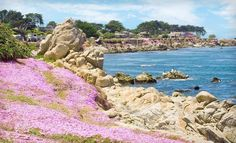 Monterey Bay, CA...such a beautiful place, and nothing is cuter than the sea otters that live there.