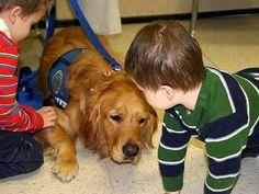 Fancy - A comfort dog meets with children in Newtown, Conn.