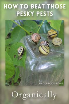 How to Beat the garden pests - without resorting to chemicals.