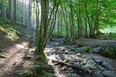 Natagorapad Ardennen