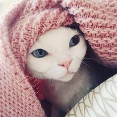 #pure white #devonrex #cat and Wannabe decor #bedthrow