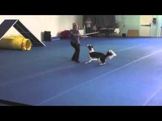 Star Wars - Canine Freestyle Routine (Twix & Pam) - YouTube