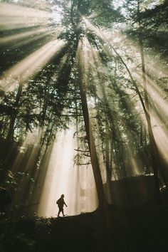 Een wandelaar geniet van een mooie wandeling door het bos. Door de lichtstralen wordt het beeld veel dramatischer. De wandelaar lijkt zeer klein in het grote bos.