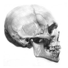 To Draw. Drawing skulls supposedly really helps with facial contours and overall head proportion.