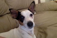 Lilly my beautiful dog :) If you like it re-pin and share! :)