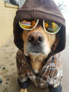 Look at this cool ol' good boy https://ift.tt/2q3suMg cute puppies cats animals