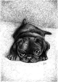 Black pug.