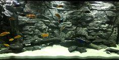 fish tank background grey rock