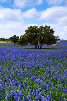"""Days of Summer"" (Title by photographer ) (really it is  spring) – Atascosa County, Texasvia lauravuphoto.com"