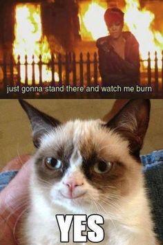 "Tard the Angry Cat | Angry cat | Grumpy Cat aka ""Tard"""