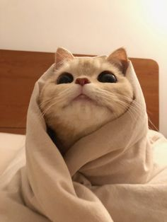 Funny Cute Cats, Cute Baby Cats, Cute Little Animals, Kittens Cutest, Cats And Kittens, Funny Animals, Gatos Cool, Sad Cat, Cute Cat Wallpaper