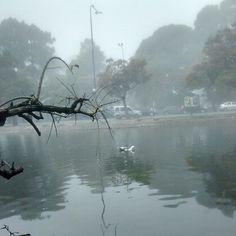 Terrible niebla en Palermo, Capital #Fog #foggy #InfoGraphic #infographics #menofog #foggia #freemyniggafogle #foglie #botafogo #foggyday #foggymorning #chasingfog #affogato #coreyfogelmanis #fogo #fogata #quadrifoglio #infografia #londonfog #l0stfog #Fogg #foglights #foglia #foggynelson #igersfoggia #infogunung #infographie #quadrifoglioverde #INFOGRAPHICZ #featuremefog