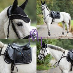 White horse with black outfit, saddle pad, bridle and browband by MagicTack Saddle Pads, Saddles, Tack, Equestrian, Bling, Magic, Horses, Outfit, Collection