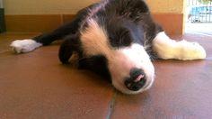 Che stanchezza!!