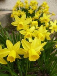 Hormones de Bouturage : Eau de Saule - Réussissez vos plantations avec les conseils d'entretien du jardin et astuces de jardinage du Village Certi'Ferme