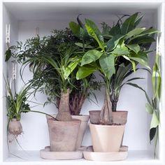 Nos conseils : - Les plantes totem | Magasin Vert - Point Vert