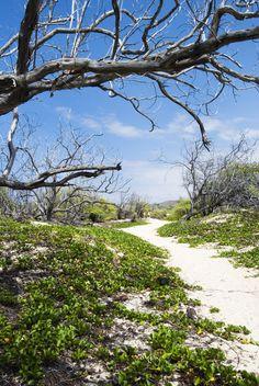 Hidden Big Island Beaches #travel #HI