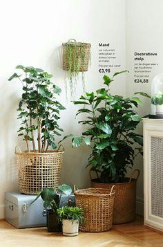 Greens and baskets by Søstrene Grene