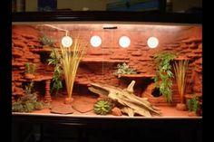 DIY vivarium I seen on YouTube. Planning on building somethin similar to this.