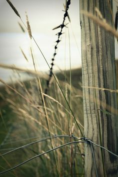 Fence w Barbed Wire