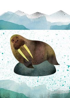 """Walrus"" illustration, 'The Curious Explorer's Illustrated Pocket Companion to Exotic Animals, A-Z', by Marc Martin."