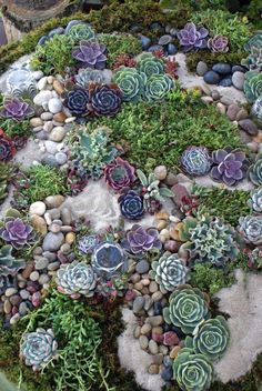 Gorgeous succulent tablescape garden! Place risers and a piece of strong glass over this for the name tag table or cake table!