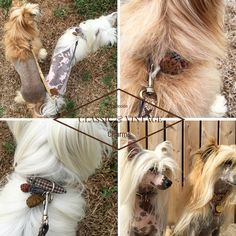 Chic fashion for pets Horses, Future, Chic, Hair Styles, Classic, Dogs, Animals, Vintage, Beauty