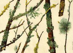 lichens e mosses watercolour