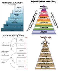 Training Pyramids/Charts: Western Dressage, USDF, German Training Scale, Cowboy Dressage