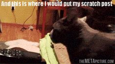 Where I would put my scratch post... so funny! click to see animation