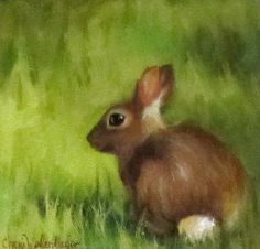 Cottontail Rabbit by Cheri Wollenberg