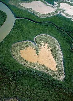 Mangrove Yves Arthus-Bertrand
