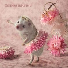 hedgehogs ballet by Elena Eremina