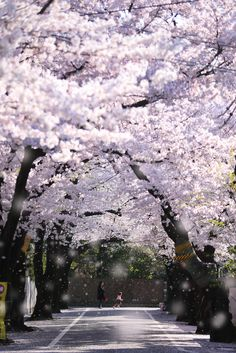 This is 日本 Landscape Photos, Landscape Photography, Nature Photography, Beautiful World, Beautiful Places, Tree Tunnel, Sakura Cherry Blossom, Cherry Blossoms, Aesthetic Japan