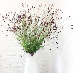 White enamel vintage jug with sanguisorba and nothing else
