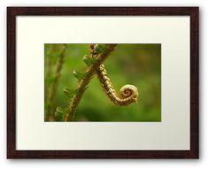 Acute Little Fern by Daogreer Earth Works