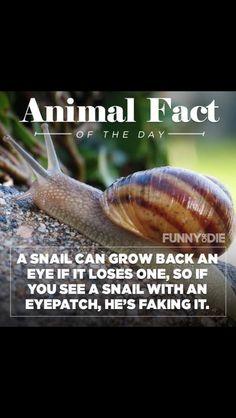 Optical humor.