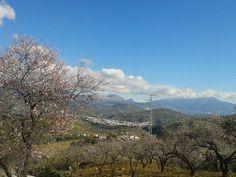 Almondblossem in February. Andalucia, Malaga, Are You Happy, February, Spain, Mountains, Nature, Travel, Naturaleza