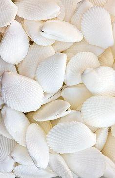 she sells sea shells {with DEBBIE! 7.26.13}