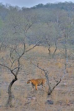 Rathembore National Park . Rajasthan