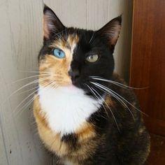 """How we behave toward cats here below determines our status in heaven."" - Robert A. Heinlein"