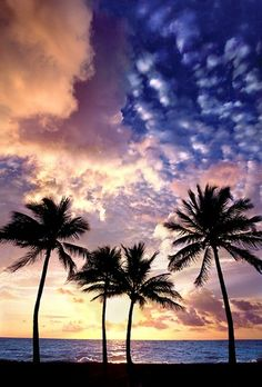 Hollywood, Florida - Planning to buy a property in Florida? Visit http://www.palmbeachcountypropertysearch.com/ or call us at 561-352-3056.
