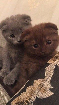 Pretty Animals, Cute Little Animals, Pretty Cats, Cute Funny Animals, Beautiful Cats, Animals Beautiful, Cute Baby Cats, Kittens Cutest, Cats And Kittens