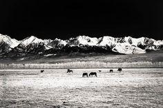 EarthScapes: Mondy-Buryatia - Russia/Mongolia #Landscape #LandscapePhotography #Nature #NaturePhotography #NatureLovers #EarthScapes #BlackWhite #Monochrome #BlackAndWhite #Mountains #Horses