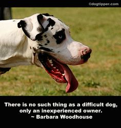"From Barbara Woodhouse (""No Bad Dogs"" author) Animal Quotes, Dog Quotes, Beautiful Dogs, Animals Beautiful, Medication For Dogs, National Animal, Animal Antics, Cute Animal Pictures, Dog Paws"