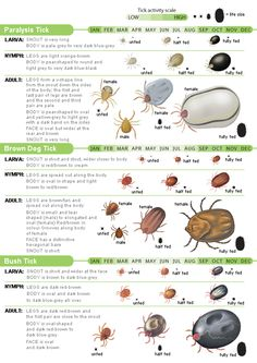 Protecting Your Family From Ticks Infographic Lyme
