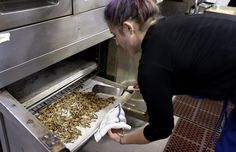 Can insects go from pests to popular snack foods?  - try #edibleinsects @ www.buggrub.com   #entomophagy  